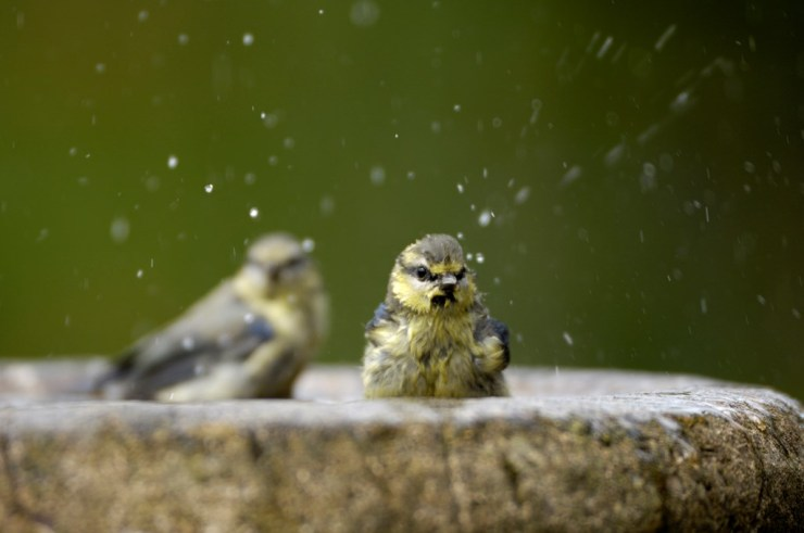 Building a bird bath in the garden, the RSPB Wild Challenge Ray Kennedy (rspb-images.com)