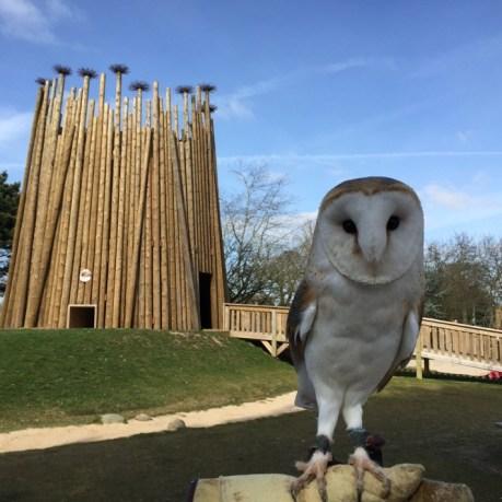 Meeting a Barn Owl at Pensthorpe in Norfolk