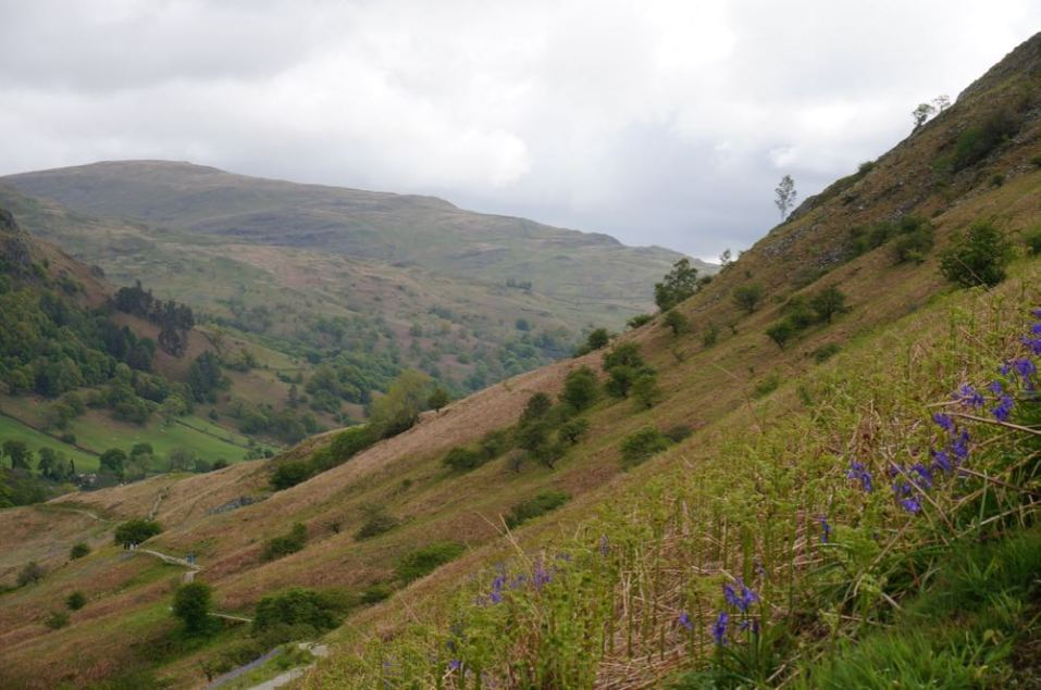 Things to do in the Lake District with kids and a dog