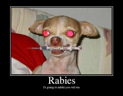 little dog with needle in mouth being funny about Rabies