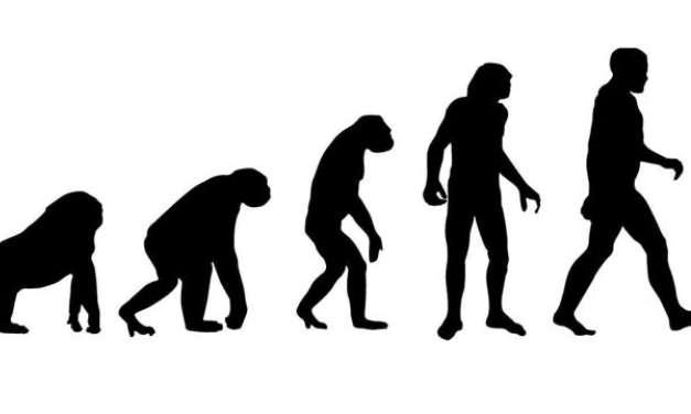 Se gli umani si sono evoluti dalle scimmie, come mai ci sono ancora scimmie?