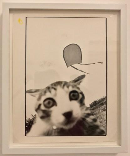 Masahisa Fukase, série Cats © Isabelle Henricot