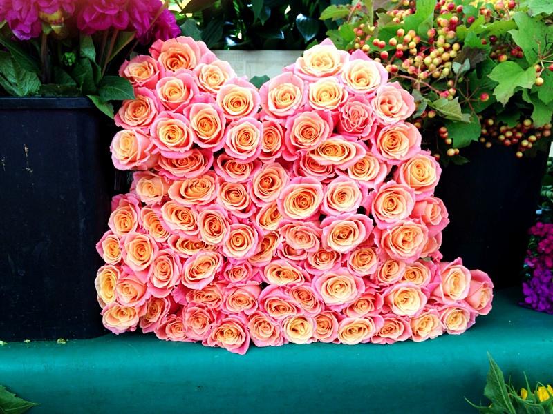 Paris market roses