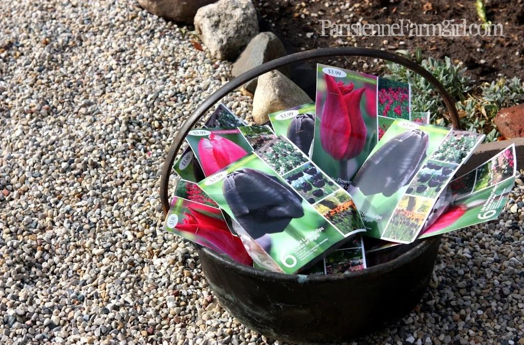 Tulip Planting 101