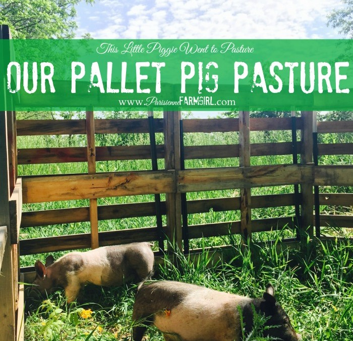Pallet Pig Pasture