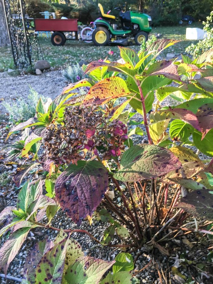 Fall Garden...November's Faded Blooms