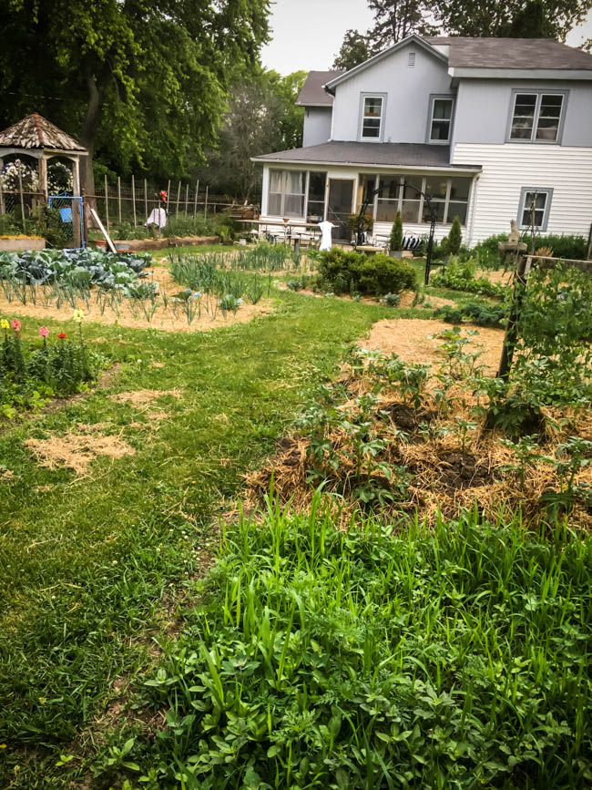 Quick Garden Pics from the Potager before the hail