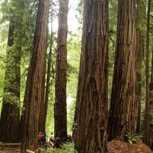 Muir Woods National Monument: Redwood Creek Trail