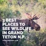 3 Best Spots to See Wildlife in Grand Teton National Park