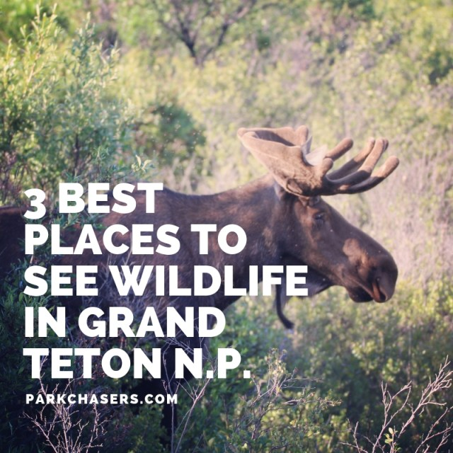 3 Best Places to See Wildlife in Grand Teton National Park