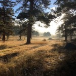 Camping in Rocky Mountain National Park:  The Moraine Park Campground