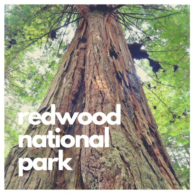 Redwoods - one of 14 National Parks with Big Trees -