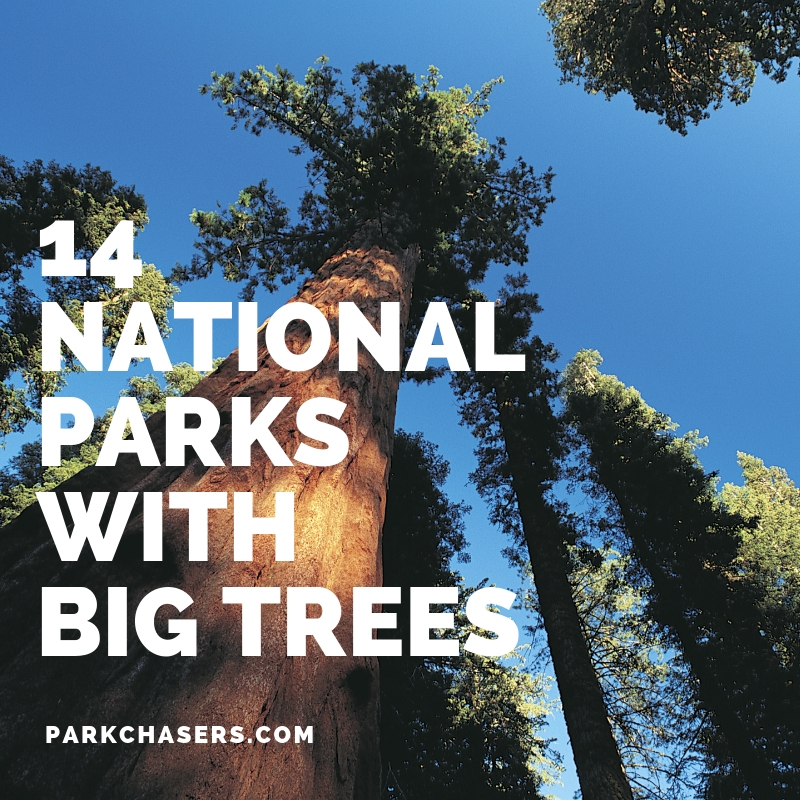 4 National Parks with Big Trees