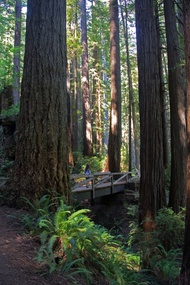 Hiking in Redwoods National Park