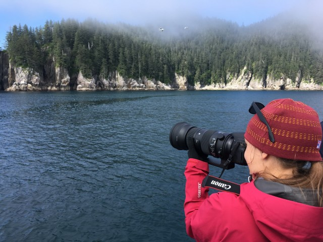 Bring a telephoto lens to Kenai Fjords National Park