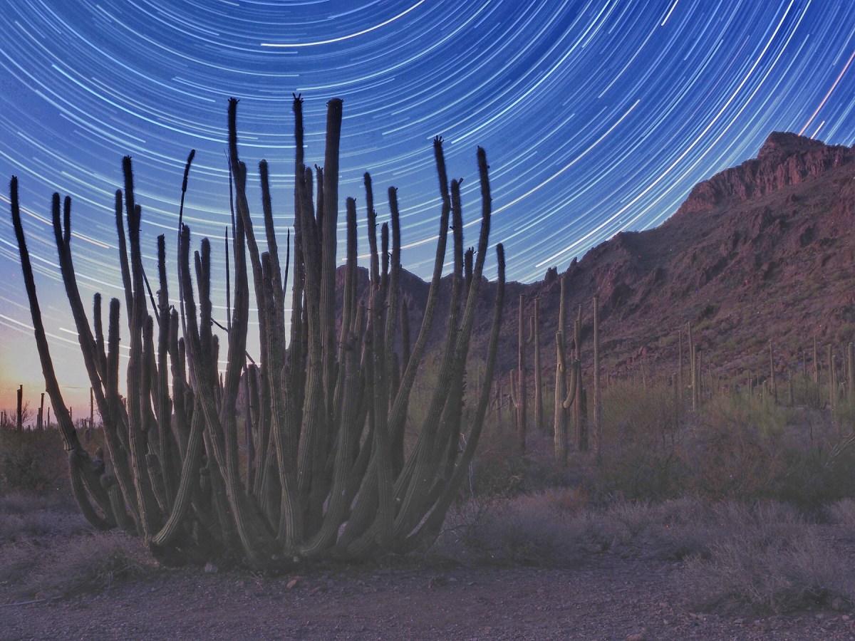 Organ Pipe Cactus National Park Night Photography
