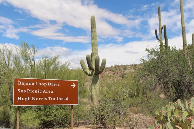 Brown Sign for Bajada Loop Drive in Saguaro National Park