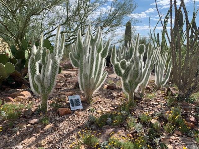 Cactus Garden at Arizona-Sonora Desert Museum