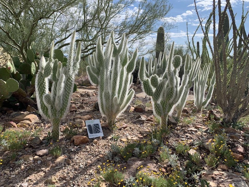 Cactus Garden at Arizona-Sonora Desert Museum