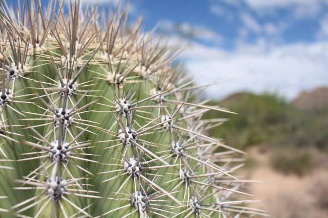 Saguaro National Park and Blue Sky