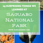 15 Surprising Things We Learned at Saguaro National Park