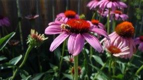honey festival honey bees parker colorado august 2012