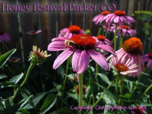 honey festival honey bees parker colorado august