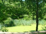 Roccolo wetland