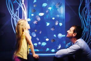 Gardaland SEA LIFE Aquarium_1311_meduse_low