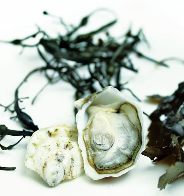Ostriche: preziose perle gastronomiche