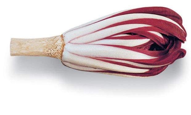 radicchio-rosso-tardivo