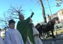 Bardi benedice in piazza gli animali e i buoi moderni