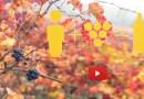 Fornovo Taro   3 – 4 – 5 novembre 2018  VINI DI VIGNAIOLI programma