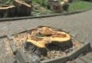 Fornovo abbattuti 8 alberi ad alto fusto pericolosi
