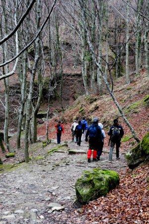 escursione nelle foreste casentinesi