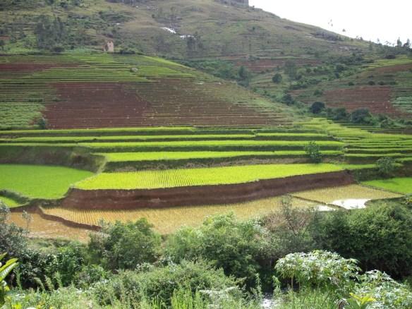 Risaie in Madagascar