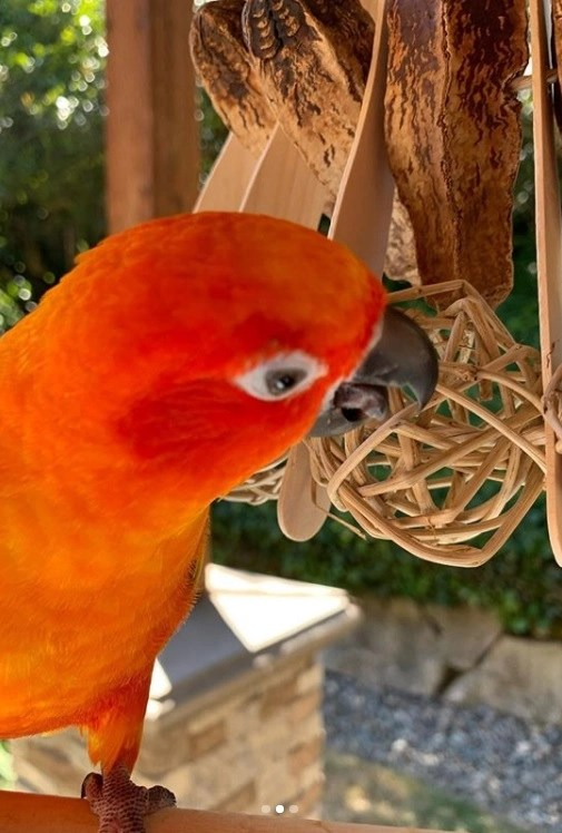 all natural parrot toys