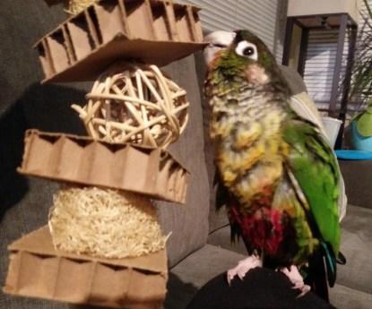 cardboard parrot toys