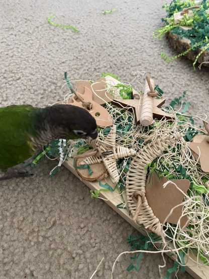 foraging board for parrots