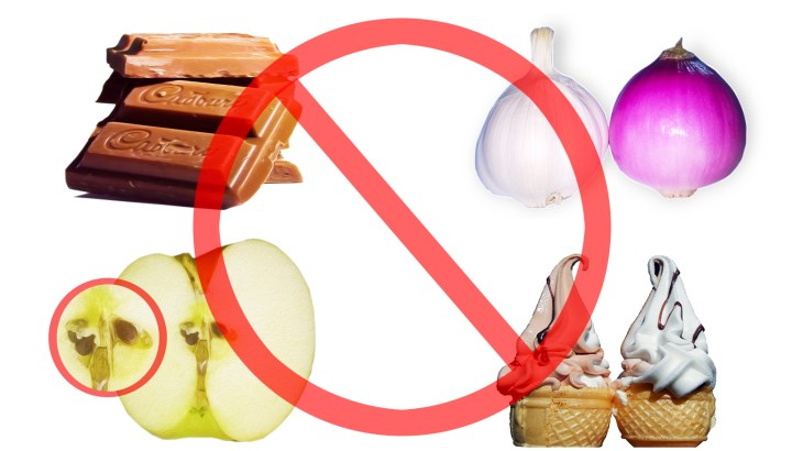 Foods that are not good for parrots.Apple seeds ,onion,garlic,iceream and choclate are shown with not sign on them
