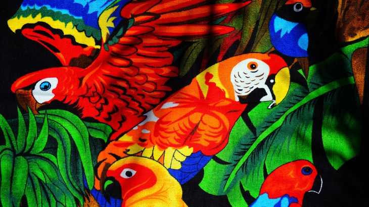 Illustration of colorful parrots including macaw parrot