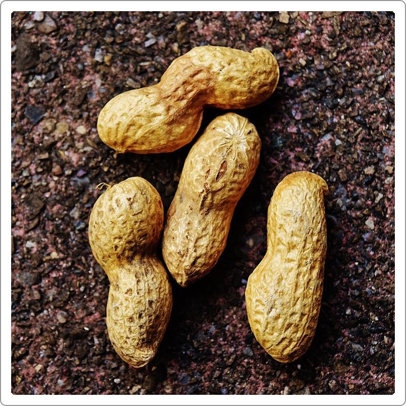 Roasted peanuts on mud