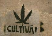 Le Parti Libertarien participera le 28 mai à Liège à la marche pour la légalisation du Cannabis.
