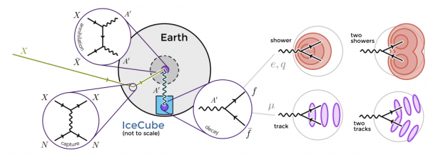 Dark matter may collect in the Earth and annihilate in to dark photons, which propagate to the surface before decaying into pairs of particles that can be detected by IceCube.