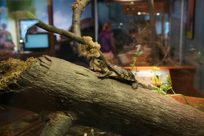 tortue aquarium de San Francisco