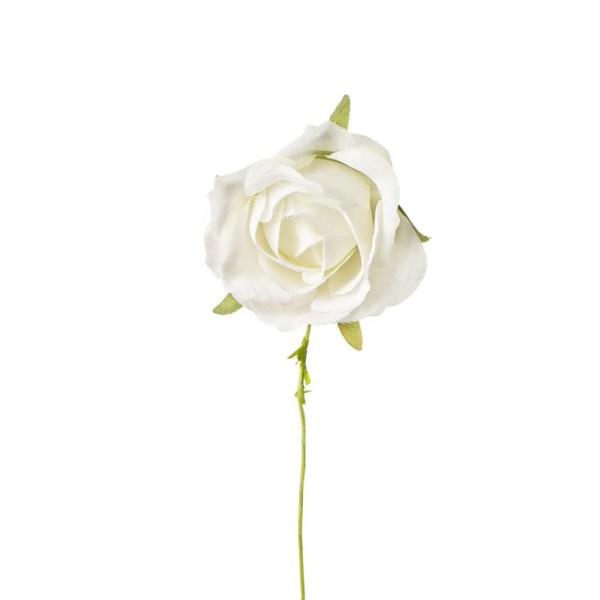 Rosa bomboniera panna