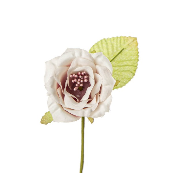 Rosa aperta fiore bomboniera rosa antico