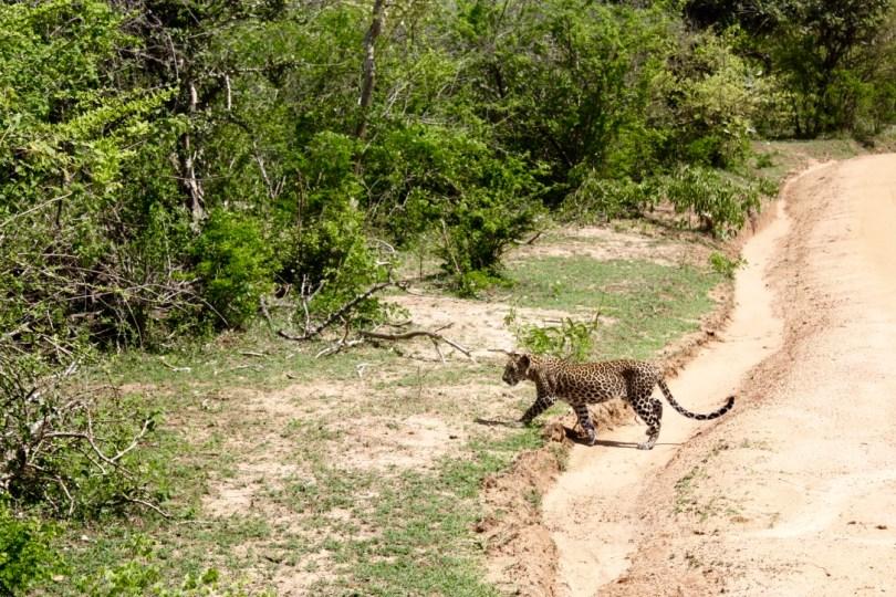 Safari Parque Nacional Yala
