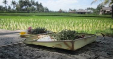 Ubud en la isla de Bali