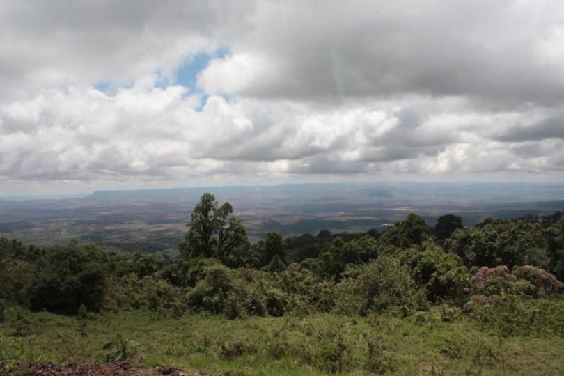 Vegetación Ngorongoro